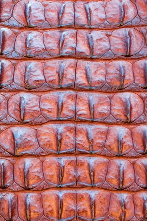 Close up shot of Alligator skin texture   The cayman leather Stock Photo - 18275759
