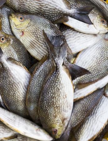 rabbitfish: Rabbitfish or  Spinefish  in  fresh market for sale