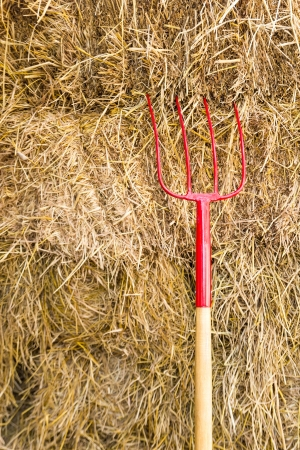 haymaking: Pitchfork sit in a pile of Straw   stacked awaiting the workers
