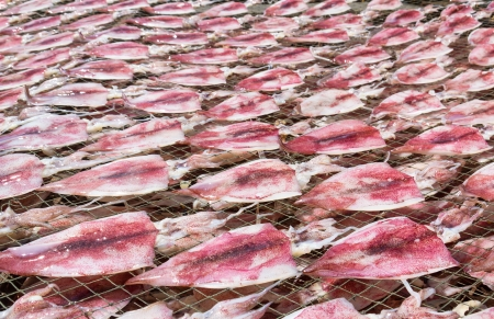 Squids placed in the strong sunshine to dry  on net in seafood market Thailand photo