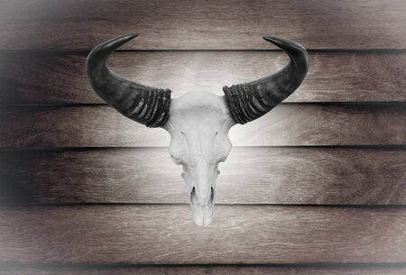 Closeup skull cow on wooden wall texture of the seamless  wood photo