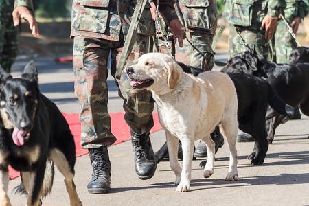 Soldat avec le chien, la formation des chiens de guerre Banque d'images - 50734622
