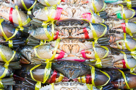 serrated: Close up Black Crab or Serrated Mud crab in fresh market Stock Photo