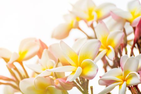 Close up Lan thom flower, Beautiful white flower in thailand