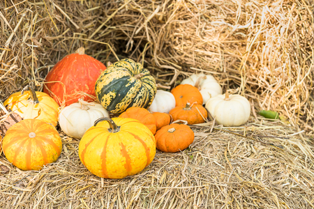 Diverse assortment of pumpkins, A bunch of pumpkins the top of a hay bale in organic farm for sale to be used as fall decorations