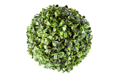 Picture of a plastic round plant decoration Stock Photo