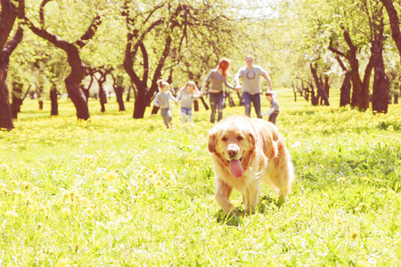 family in park: Dog runs on a green alley and a happy family in the background