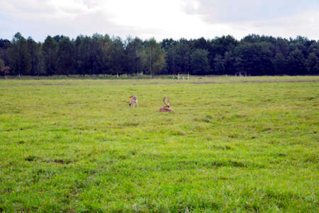 herd of deer: Herd of deer grazing on grass Stock Photo