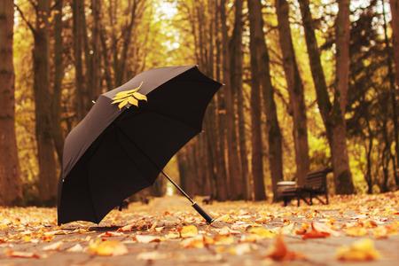 the weather: paraguas con una hoja de oto�o en el callej�n en el parque Foto de archivo