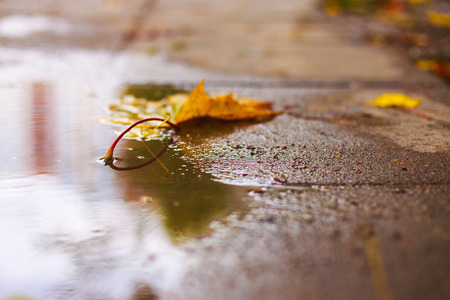autumn leaf on the asphalt near a puddle