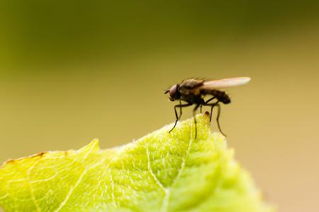 Fly летать крупным планом. муха на листе Фото со стока