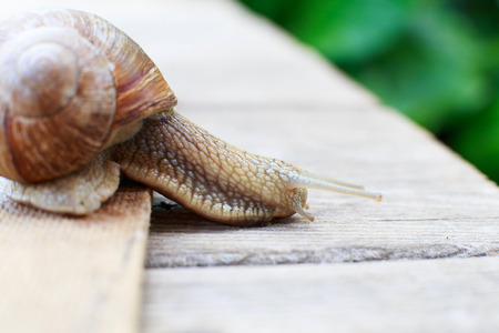 the snail crawls on a wooden background in the garden