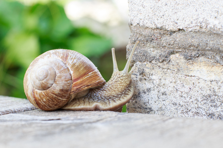 the snail is climbing the wall in the garden