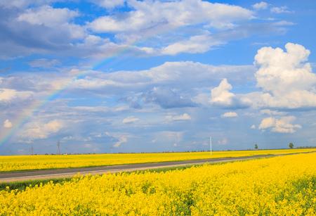 el campo de colza con un cielo azul Foto de archivo