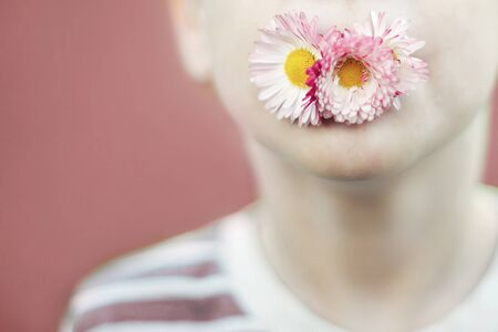 man with a daisy flower on a pink background close.  child mouth with flower on a pink background. Stock Photo