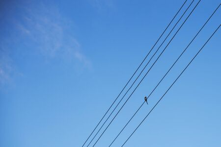 bird wagtail sits on wires against a blue sky Stock Photo