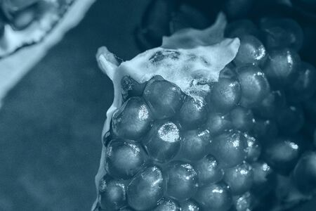 pomegranate seeds close-up. pomegranate on a dark background. classic blue trend color