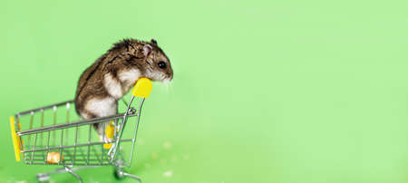 Funny Djungarian hamster sits in children's empty shopping cart and runs away on a green background. Funny pet is having fun. banner Stockfoto