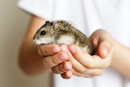 Cute little hamster in the child's hands close Stockfoto