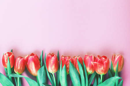 Pink fresh flowers tulips background with a copy space. Romantic composition. Flat lay, top view.