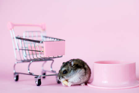 Funny Djungarian hamster with childrens empty shopping cart eating nut near his bowl on pink background 写真素材