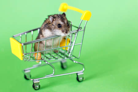 Funny Djungarian hamster sits in children s empty shopping cart on green background. Funny pet is having fun