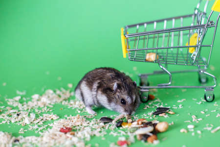 Funny Djungarian hamster with childrens empty shopping cart eating feed on green background 写真素材