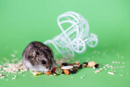 Funny Djungarian hamster eating feed near vintage decorative stroller on green background 写真素材