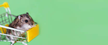 Funny Djungarian hamster sits in childrens empty shopping cart on green background. Funny pet is having fun. banner 写真素材