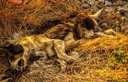 dead dog: The Dead Dog