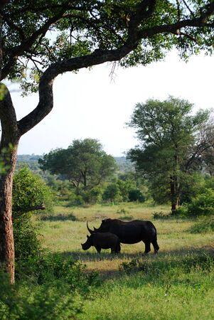Rhino in South Africa photo