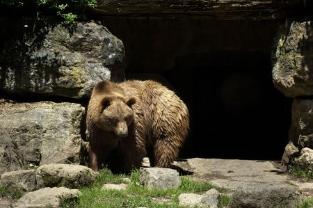 Bear in front of cave Stock Photo