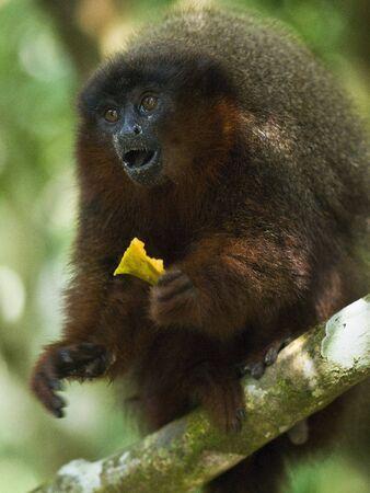 Shocked Monkey Stock Photo
