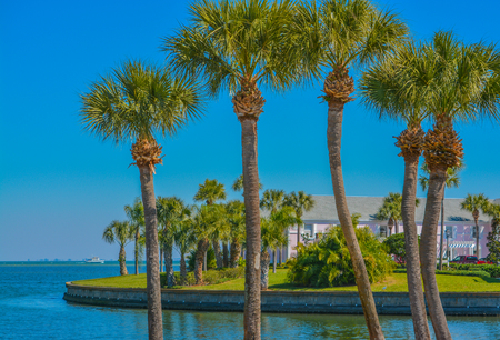 Peaceful palms on Tampa Bay in St Petersburg, Florida.