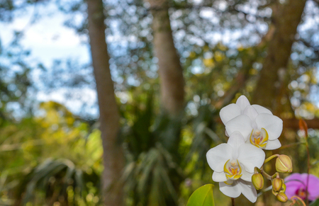 A beautiful white Orchid at Mead Botanical Garden in Winter Park Orlando, Florida 版權商用圖片
