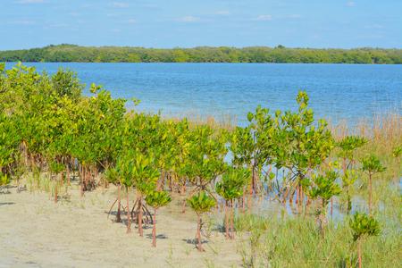 tampa bay: Mangroves on Tampa Bay, Florida. Stock Photo