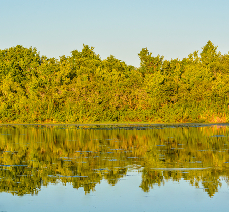 A beautiful day to see the reflection of the trees on the lake at John S. Taylor Park in Largo, Florida. Stock Photo