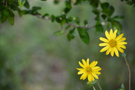 subtropical plants: Daisys growing in Largo Stock Photo