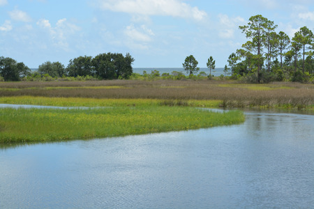 bluesky: River flowing through a meadow to St George Sound, Florida.