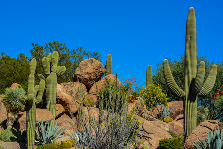 Desert cactus landscape in Arizona