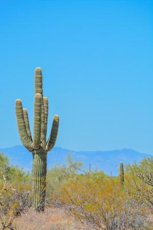 Desert cactus landscape in Arizona