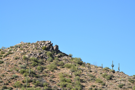 Saguaro Cactus in Tonto National Forest