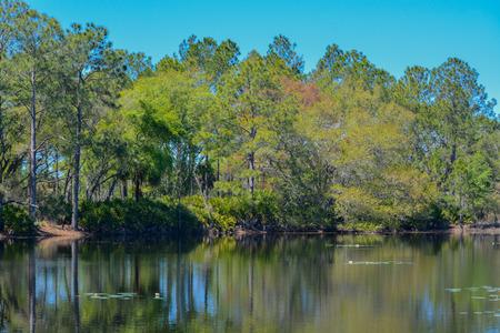 Lake in Flatwoods Park Hillsborough county, Florida