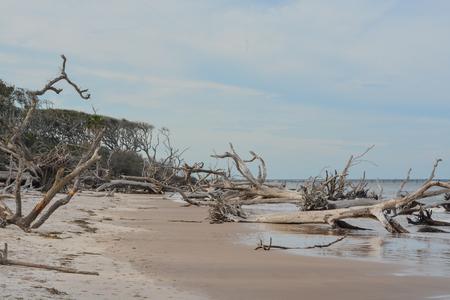 Driftwood Beach,Big Talbot Island State Park,Duval county,Atlantic Ocean,Florida
