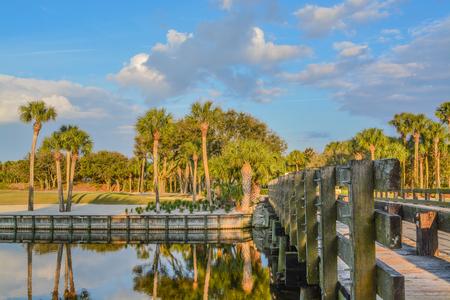 Palm trees on Lake Vedra. Ponte Vedra Beach, Florida 免版税图像 - 117808859