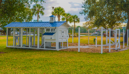 Chicken Coop in St Johns County, Florida
