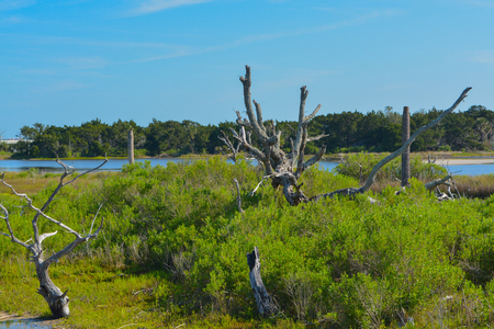 Sawpit Creek at Big Talbot State Park, Jacksonville, Duval County, Florida USA Imagens