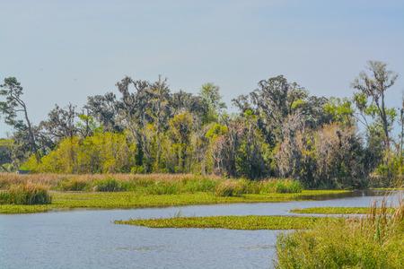 Tidal freshwater marsh, Savannah National Wildlife Refuge, Hardeeville, Jasper County, South Carolina USA