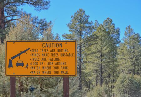 A sign warning. Dead trees are rotting. Winds make trees unstable. Trees are falling. Look up, Look around. Watch where you park and walk. Navajo County, Sitgreaves National Forest, Arizona USA