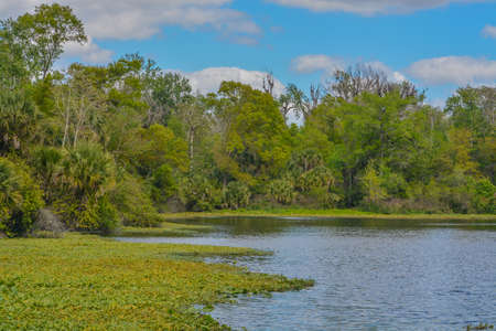 The Beautiful Wekiwa River slowly moving through Wekiwa Springs State Park in Opapka, Seminole County, Florida 免版税图像